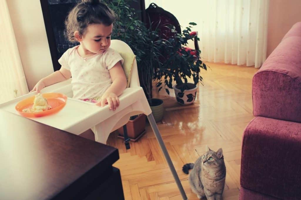 Young toddler sitting in high looking at the cat beside her on the floor who's looking up expectantly at her, hoping she'll drop some food!